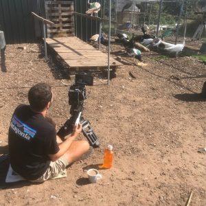 Camera man videoing Peacocks for documentaries